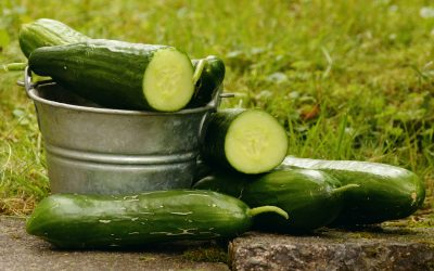 Power of Cucumber- Cucumbers Are Not Only for Pickles